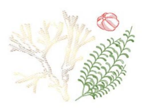 Guarana Laminaria Horsetail